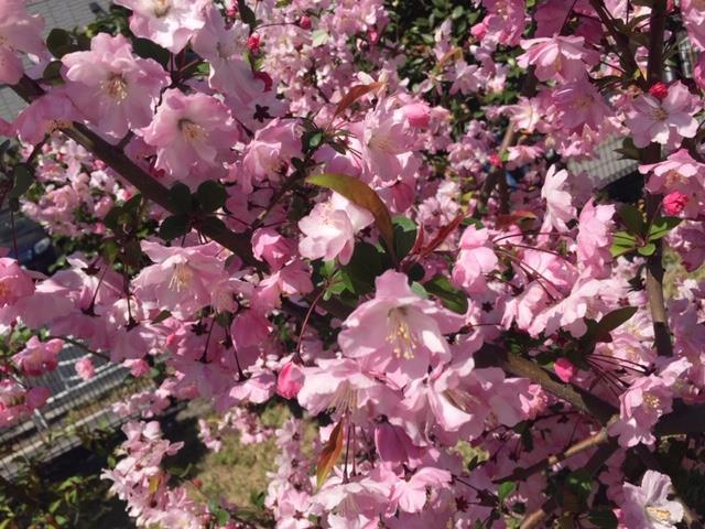 桜~Part2